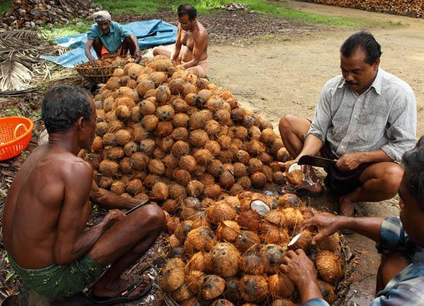 coconut-husk-vaikom-kerala