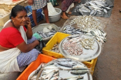 fish-market-vaikom-kerala