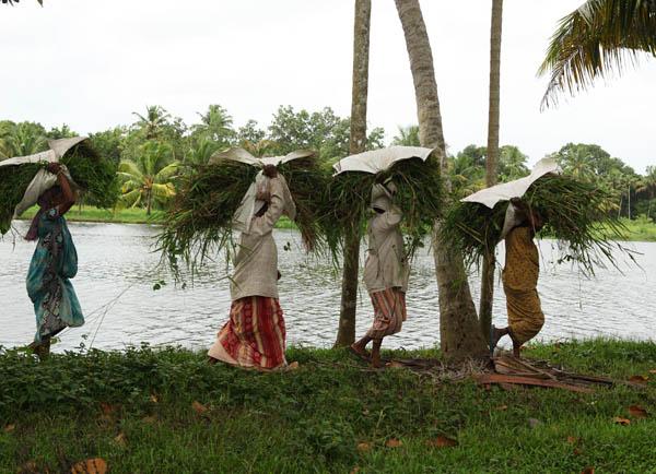 vaikom-village-woman-kerala