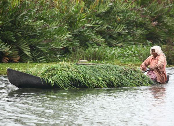 village-woman-vaikom-kerala