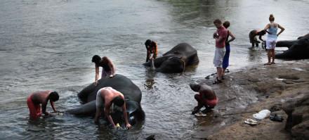 kodanad-elephant-bathing